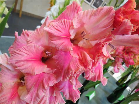 Biedrības namu rotās gladiolu izstāde | liepajniekiem.lv
