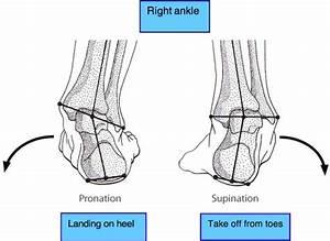 Let's Twist Again – Those Pesky Ankle Sprains - Open ...