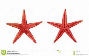Etoile De Mer Dofus : d coration s che d 39 toiles de mer de la mer rouge photo stock image du nature plage 45984416 ~ Medecine-chirurgie-esthetiques.com Avis de Voitures