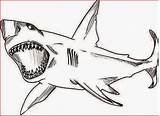 Shark Coloring Pages Printable Filminspector sketch template