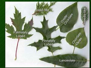 Name That Plant Part