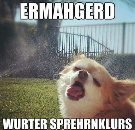 dog meme    brighten  day