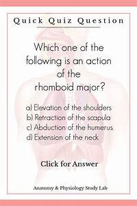 Muscular System Practice Questions