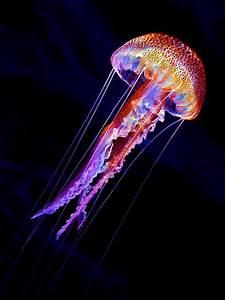 Jellyfish Photographs | Fine Art America