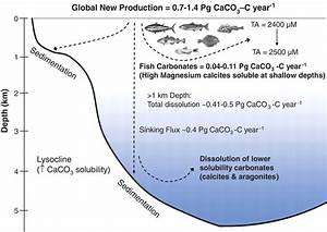 Contribution Of Fish To The Marine Inorganic Carbon Cycle