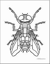 Coloring Housefly Clip Insects Flies Fly Clipart Pages Insect Abcteach Body Bugs Cache1 Parts Creative sketch template