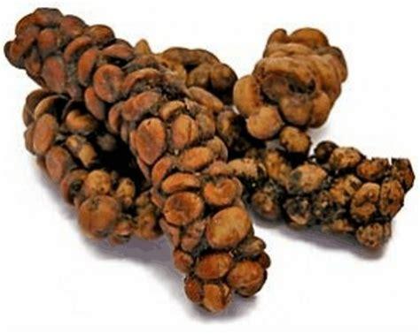 kopi luwak coffee processing method darrin s coffee