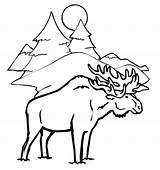 Moose Coloring Winter Animals Drawing Head Animal Printable Drawings Elk Sheets Tree Azcoloring Popular Paintingvalley Getdrawings Template Coloringhome sketch template