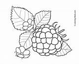 Coloring Pages Fruits Berries Raspberry Fruit Printable Flowers Vegetables Colouring Drawing Clip Embroidery Flower Sheets Stamps Crafts Vegetable Colored Patterns sketch template