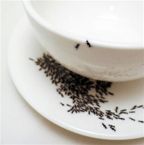 ants in kitchen common ant infested areas in the home sarasota and bradenton s best pest control and lawn