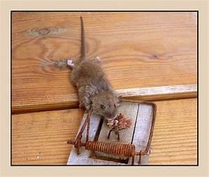 Maus In Wohnung : nawaina r tsell sung ~ Markanthonyermac.com Haus und Dekorationen