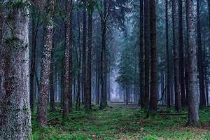 Europe U0026 39 S Lost Forests  U2013 Study Shows Coverage Has Halved