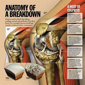 133 Best Images About Anatomy