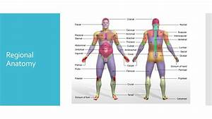Sports Medicine Standard 2