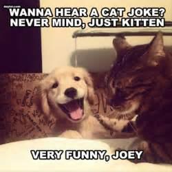 cat jokes for one liner cat jokes dump a day