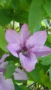 Mon Cabanon Creatif : mon jardin mes fleurs ~ Zukunftsfamilie.com Idées de Décoration