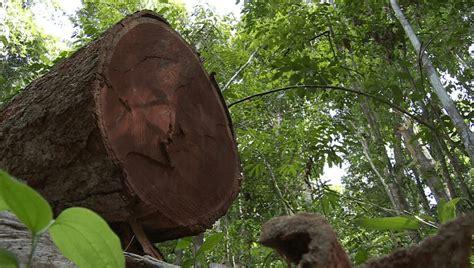 La Destruction De La Forêt Amazonienne Au Brésil A