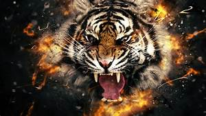 Fire evil tiger wallpapers and images - wallpapers ...