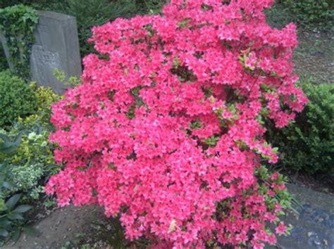 blumen für schattige plätze blumen schattiger standort welche blumen im schatten garten pflanzen blumen und pflanzen f r