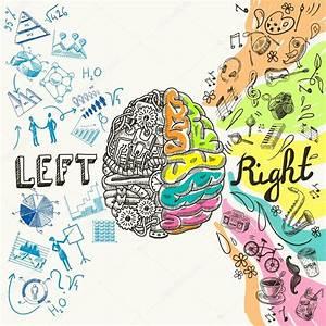 Croquis des hémisphères du cerveau — Image vectorielle ...