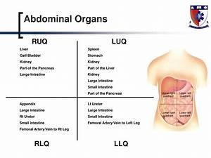 Luq Organs