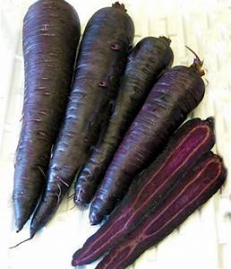 The Vegetable Seed Store Root Vegetable Seeds