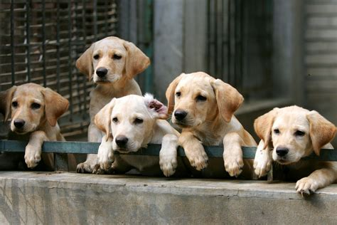 How To Avoid Bad Dog Breeders And Backyard Breeders
