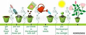 U0026quot Instructions On How To Plant Flower In Sequence Of Easy
