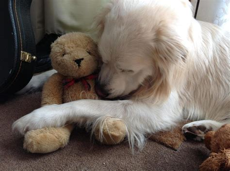 adorable pets cuddling    stuffed animals