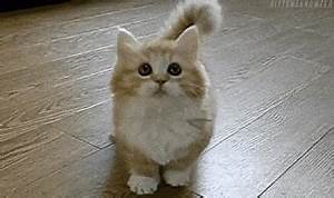 Cute Cat GIF - Find & Share on GIPHY