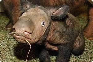 Strangest And Rarest Animals In World   deCHIVE
