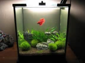 planted betta tanks planted 10 gallon betta tank 2017 fish tank maintenance