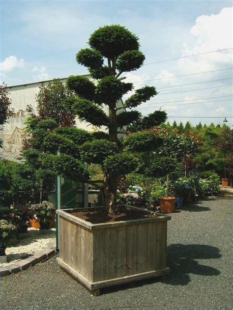 Bäume Für Japanischen Garten by Zierb 228 Ume F 252 R Den Garten