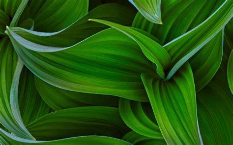 plantas flor de cerca fondos de pantalla plantas flor de