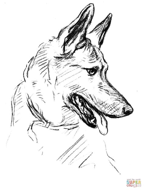 German Shepherd Dog Portrait coloring page | Free Printable | Dog coloring page, German