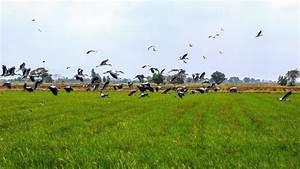 Faire Fuir Les Pigeons : rpulsif oiseaux fait maison decamp repulsif oiseaux pices ~ Melissatoandfro.com Idées de Décoration