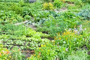Wann Welches Gemüse Pflanzen Tabelle : gem segarten so funktioniert die mischkultur ~ Frokenaadalensverden.com Haus und Dekorationen