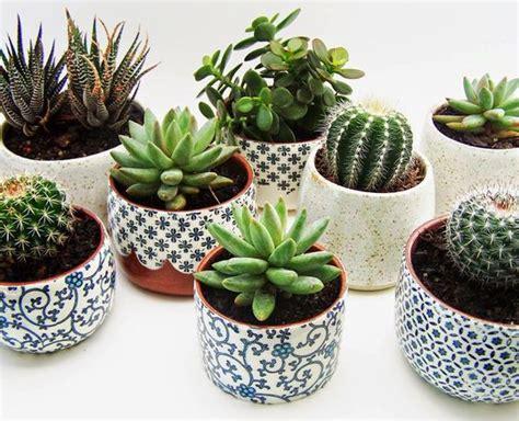 patterned pots green thumb pinterest planters