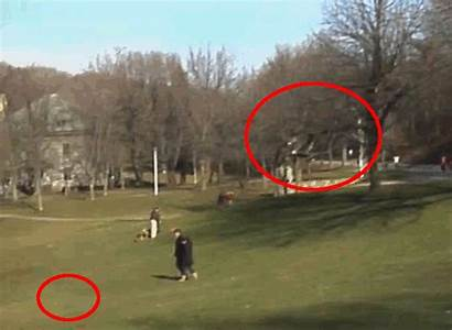 Eagle Hoax Fake Montreal Snatching Stealing Animated