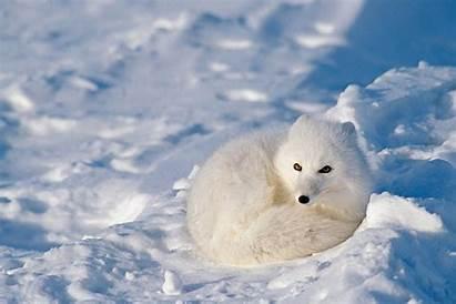 Animals Winter Cold Weather Frog Creatures Freezes