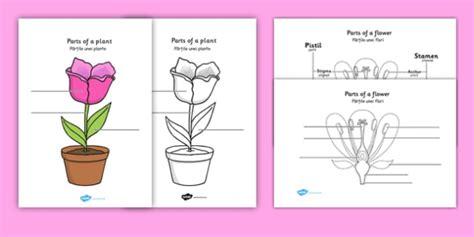 parts   plant  flower labelling worksheet romanian