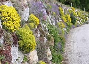 Blumen Für Steingarten : steingarten und trockenmauern dachbegr nung information pflanzenshop ~ Markanthonyermac.com Haus und Dekorationen