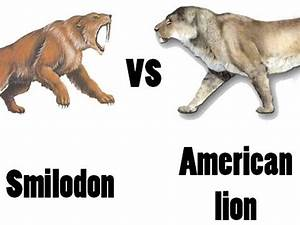 American Lion vs Sabre-Toothed Cat - Who would win in a ...
