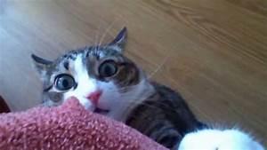 Stalker Cat - YouTube