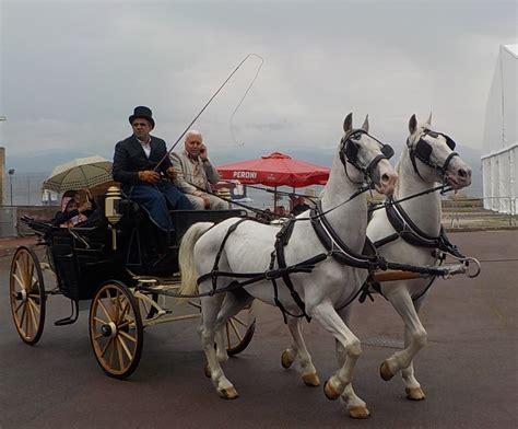 carrozza a cavalli messina in carrozza il raduno delle vetture d epoca foto