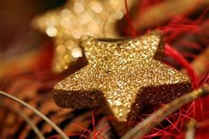 Kostenloses Foto  Weihnachtsstern