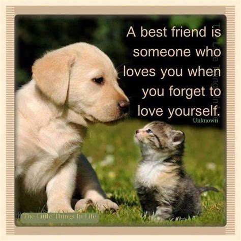Best Friends Animal A Best Friend Not A Friend Just