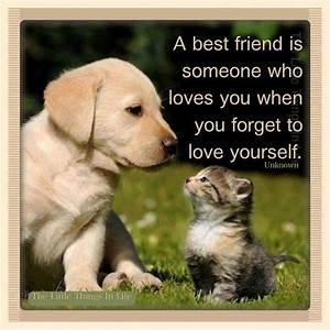 A BEST friend. Not a FAKE friend. | just damn cute ...