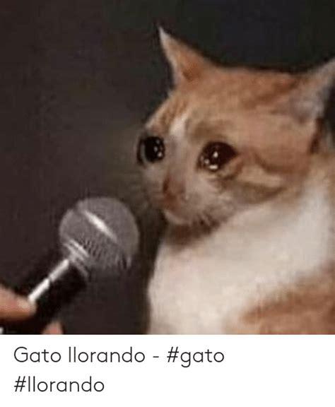 Gato Llorando Gato Llorando Gato Meme On Meme