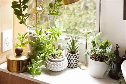 Plants Indoor Homestead Garden Tin Apartmenttherapy Grow